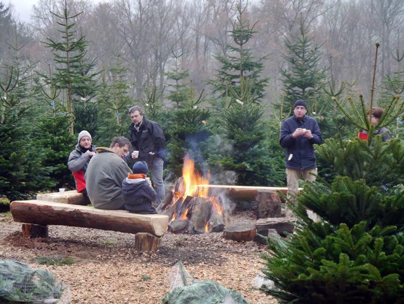 Tannenbaum Selber Schlagen.Weihnachtsbaum Ortlepp In Rothemann Weihnachtsbaum Selbst